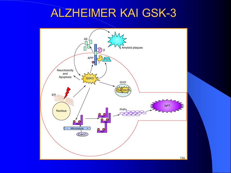 ALZHEIMER KAI GSK-3