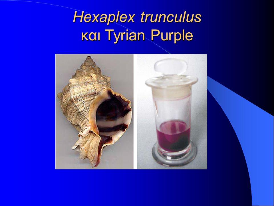 Hexaplex trunculus και Tyrian Purple