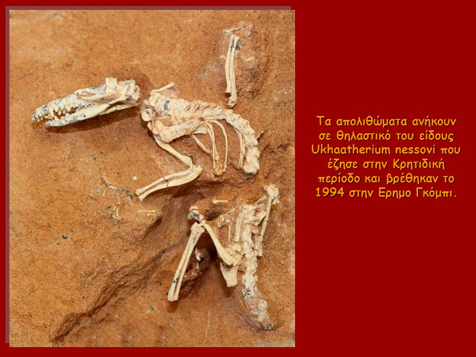 Τα απολιθώματα ανήκουν σε θηλαστικό του είδους Ukhaatherium nessovi που έζησε στην Κρητιδική περίοδο και βρέθηκαν το 1994 στην Ερημο Γκόμπι.