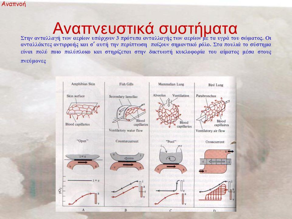 Αναπνευστικά συστήματα Αναπνοή Στην ανταλλαγή των αερίων υπάρχουν 3 πρότυπα ανταλλαγής των αερίων με τα υγρά του σώματος.