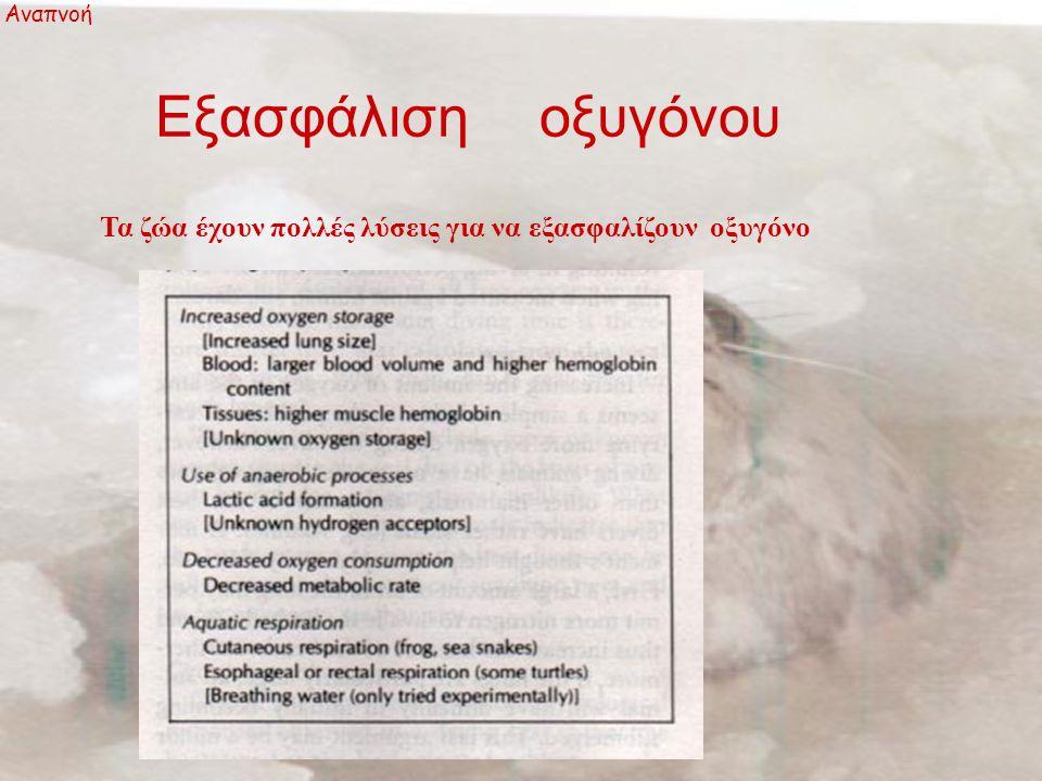 Εξασφάλιση οξυγόνου Τα ζώα έχουν πολλές λύσεις για να εξασφαλίζουν οξυγόνο Αναπνοή