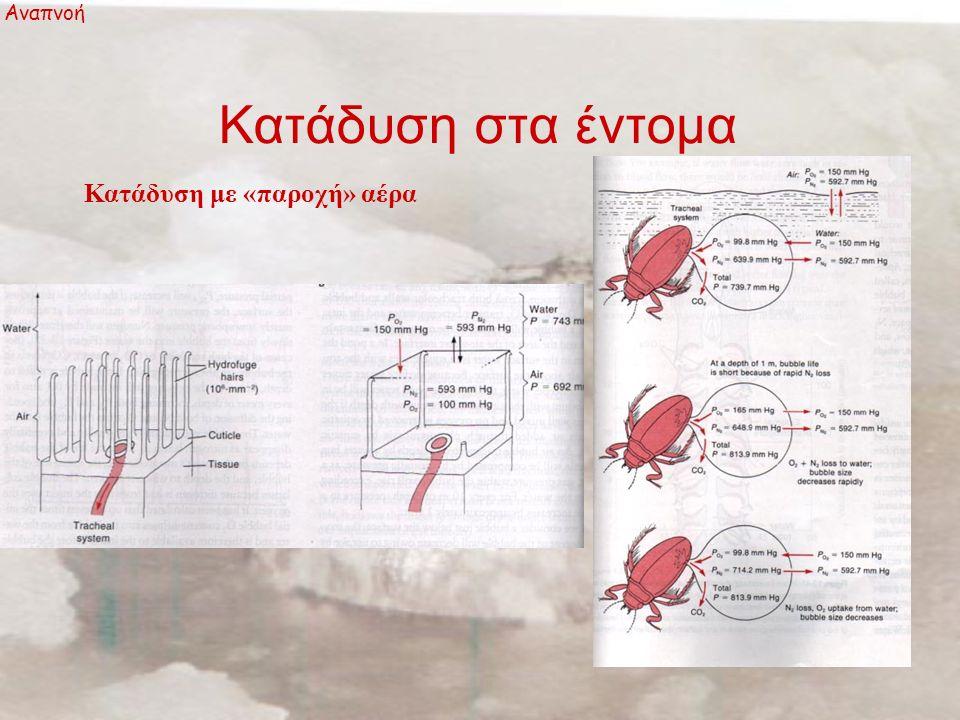 Κατάδυση στα έντομα Αναπνοή Κατάδυση με «παροχή» αέρα