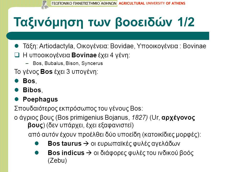 Ταξινόμηση των βοοειδών 1/2 Τάξη: Artiodactyla, Οικογένεια: Bovidae, Υποοικογένεια : Bovinae  Η υποοικογένεια Bovinae έχει 4 γένη: –Bos, Bubalus, Bison, Syncerus To γένος Bos έχει 3 υπογένη: Βοs, Bibos, Poephagus Σπουδαιότερος εκπρόσωπος του γένους Bos: ο άγριος βους (Bos primigenius Bojanus, 1827) (Ur, αρχέγονος βους) (δεν υπάρχει, έχει εξαφανιστεί) από αυτόν έχουν προέλθει δύο υποείδη (κατοικίδιες μορφές): Bos taurus  oι ευρωπαϊκές φυλές αγελάδων Bos indicus  οι διάφορες φυλές του ινδικού βοός (Zebu)