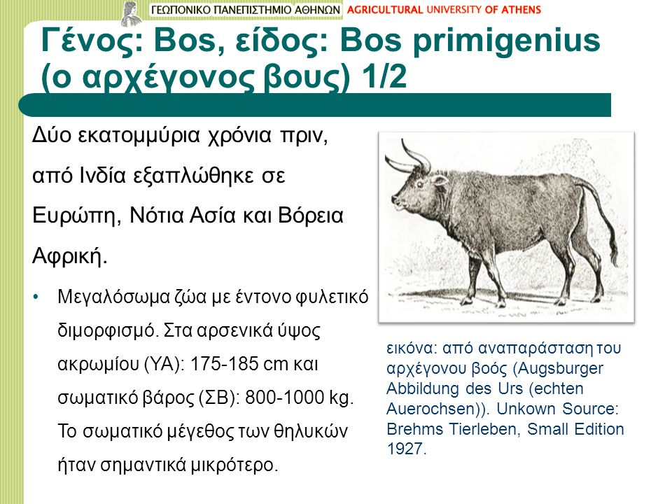 Γένος: Bos, είδος: Bos primigenius (o αρχέγονος βους) 1/2 Δύo εκατομμύρια χρόνια πριν, από Ινδία εξαπλώθηκε σε Ευρώπη, Νότια Ασία και Βόρεια Αφρική.