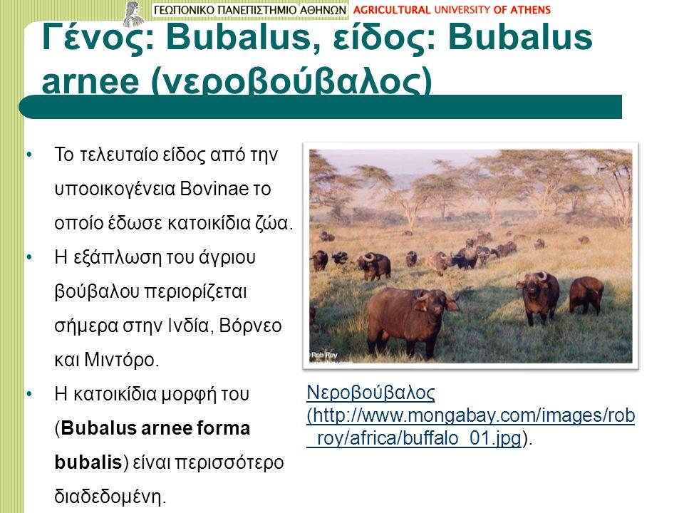 Γένος: Bubalus, είδος: Bubalus arnee (νεροβούβαλος) Το τελευταίο είδος από την υποοικογένεια Bovinae το οποίο έδωσε κατοικίδια ζώα. Η εξάπλωση του άγρ
