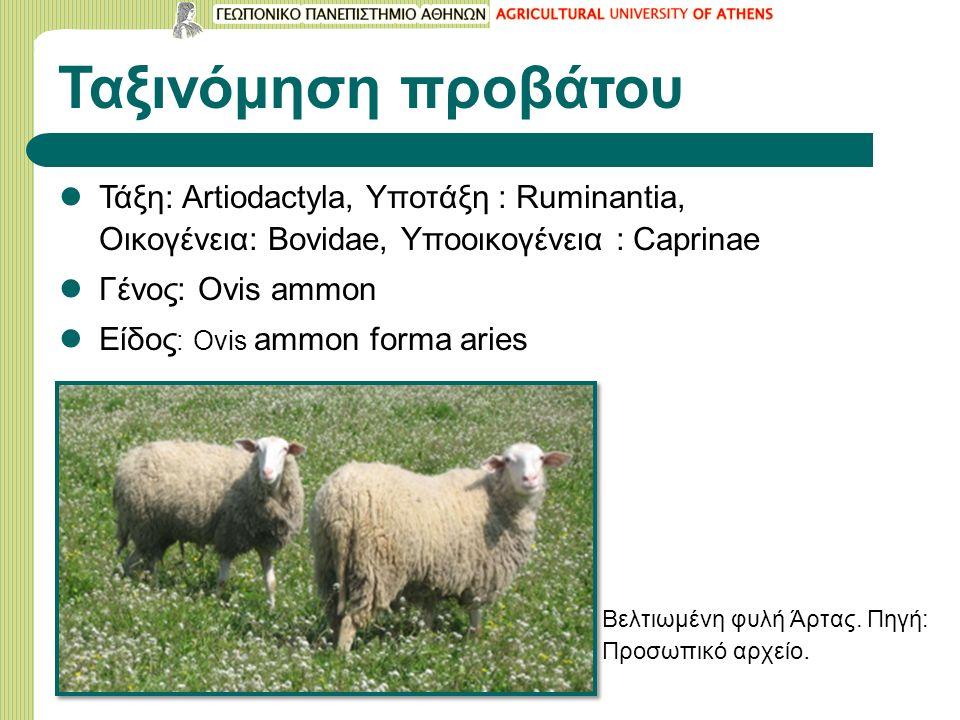 Ταξινόμηση προβάτου Τάξη: Artiodactyla, Υποτάξη : Ruminantia, Οικογένεια: Bovidae, Υποοικογένεια : Caprinae Γένος: Ovis ammon Είδος : Ovis ammon forma