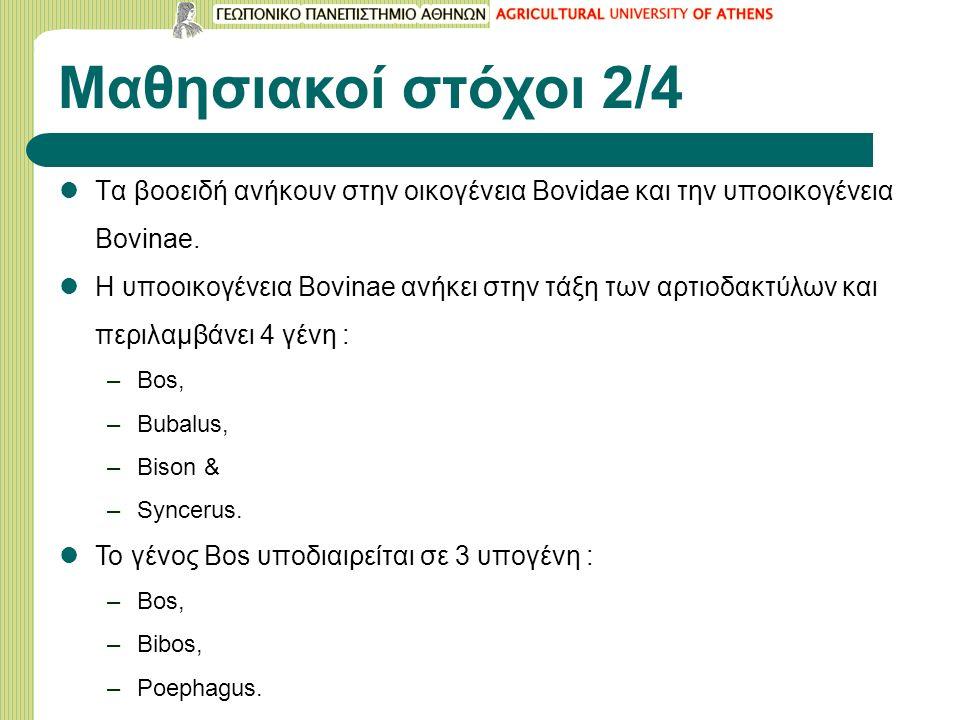 Μαθησιακοί στόχοι 2/4 Tα βοοειδή ανήκουν στην οικογένεια Bovidae και την υποοικογένεια Bovinae. H υποοικογένεια Bovinae ανήκει στην τάξη των αρτιοδακτ