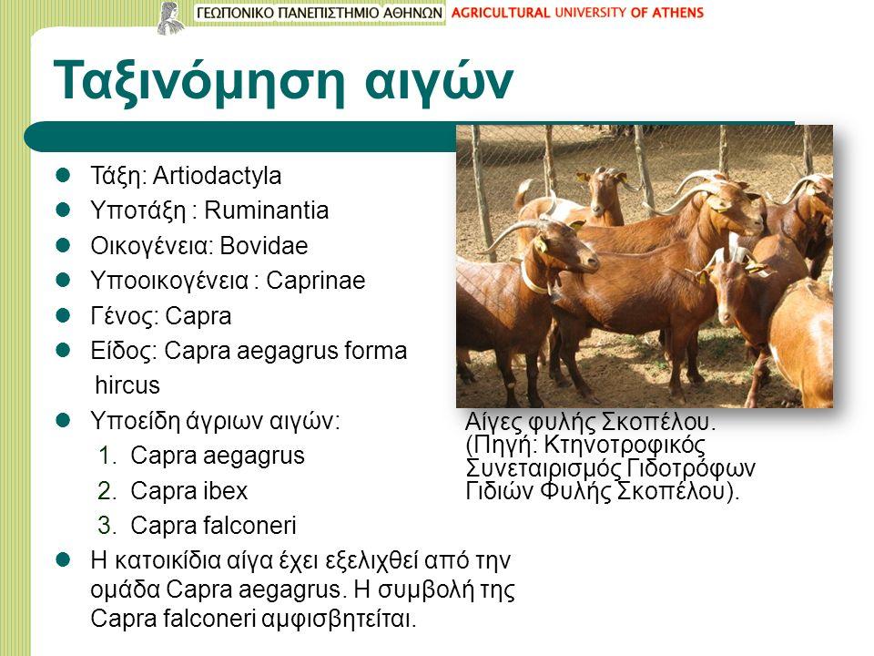 Ταξινόμηση αιγών Τάξη: Artiodactyla Υποτάξη : Ruminantia Οικογένεια: Bovidae Υποοικογένεια : Caprinae Γένος: Capra Είδος: Capra aegagrus forma hircus Υποείδη άγριων αιγών: 1.Capra aegagrus 2.Capra ibex 3.Capra falconeri Η κατοικίδια αίγα έχει εξελιχθεί από την ομάδα Capra aegagrus.
