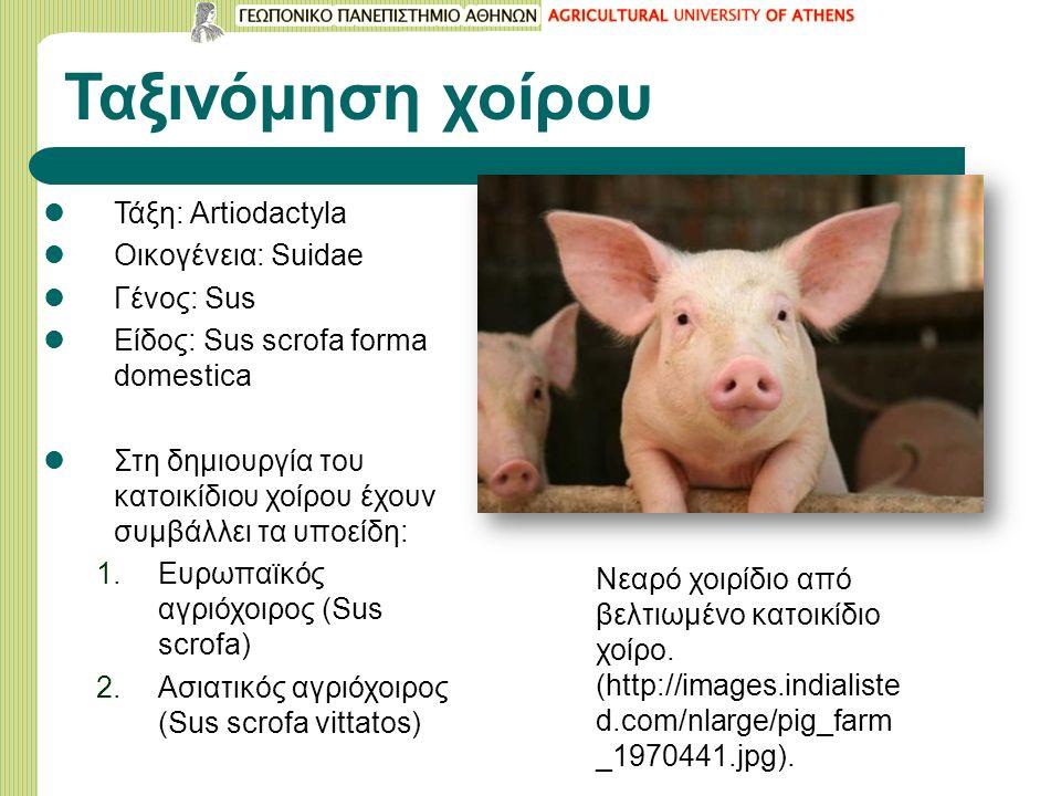Ταξινόμηση χοίρου Τάξη: Artiodactyla Οικογένεια: Suidae Γένος: Sus Είδος: Sus scrofa forma domestica Στη δημιουργία του κατοικίδιου χοίρου έχουν συμβάλλει τα υποείδη: 1.Ευρωπαϊκός αγριόχοιρος (Sus scrofa) 2.Ασιατικός αγριόχοιρος (Sus scrofa vittatos) Νεαρό χοιρίδιο από βελτιωμένο κατοικίδιο χοίρο.