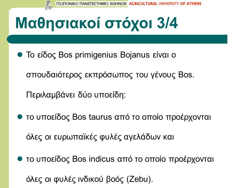 Μαθησιακοί στόχοι 3/4 Το είδος Bos primigenius Bojanus είναι ο σπουδαιότερος εκπρόσωπος του γένους Bos. Περιλαμβάνει δύο υποείδη: το υποείδος Bos taur