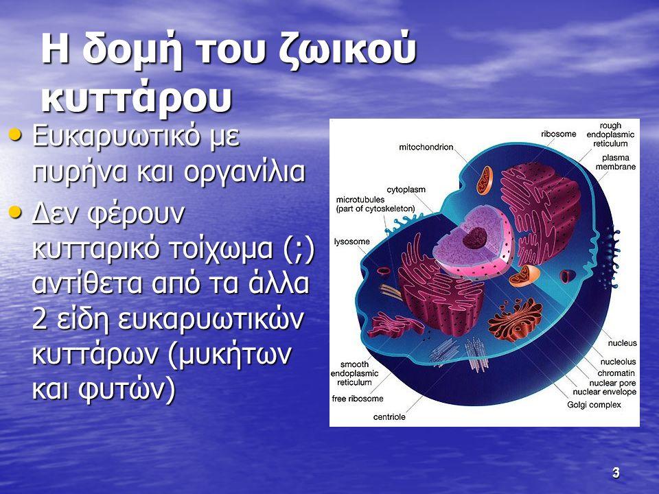 3 Η δομή του ζωικού κυττάρου Ευκαρυωτικό με πυρήνα και οργανίλια Ευκαρυωτικό με πυρήνα και οργανίλια Δεν φέρουν κυτταρικό τοίχωμα (;) αντίθετα από τα άλλα 2 είδη ευκαρυωτικών κυττάρων (μυκήτων και φυτών) Δεν φέρουν κυτταρικό τοίχωμα (;) αντίθετα από τα άλλα 2 είδη ευκαρυωτικών κυττάρων (μυκήτων και φυτών) 3