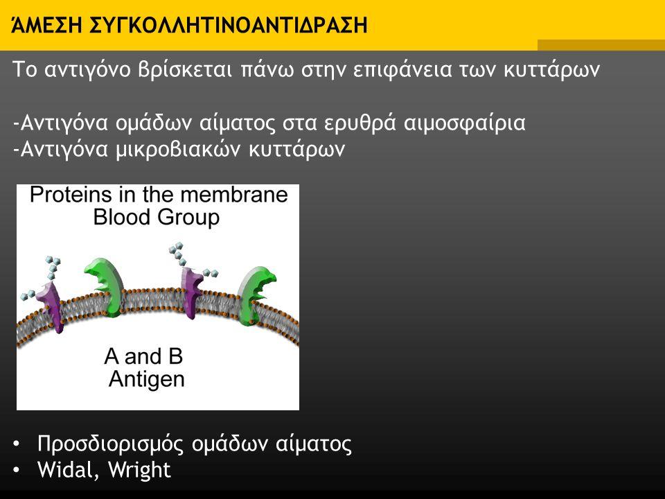 ΆΜΕΣΗ ΣΥΓΚΟΛΛΗΤΙΝΟΑΝΤΙΔΡΑΣΗ Το αντιγόνο βρίσκεται πάνω στην επιφάνεια των κυττάρων -Αντιγόνα ομάδων αίματος στα ερυθρά αιμοσφαίρια -Αντιγόνα μικροβιακών κυττάρων Προσδιορισμός ομάδων αίματος Widal, Wright