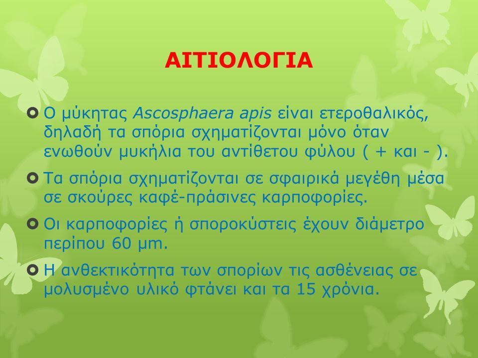 ΑΙΤΙΟΛΟΓΙΑ  Ο μύκητας Ascosphaera apis είναι ετεροθαλικός, δηλαδή τα σπόρια σχηματίζονται μόνο όταν ενωθούν μυκήλια του αντίθετου φύλου ( + και - ).