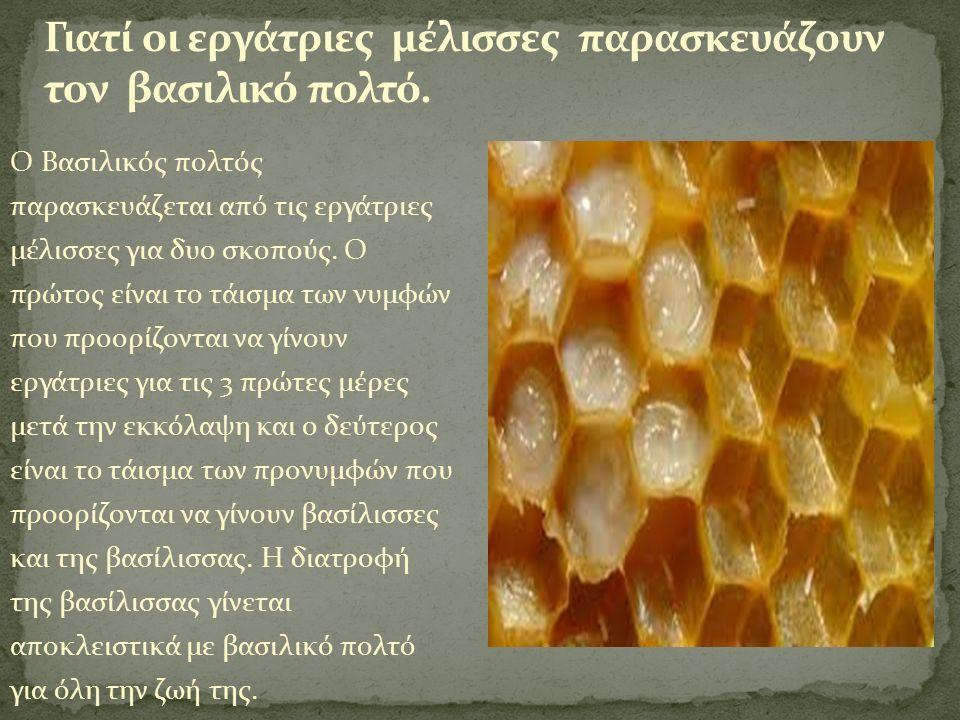 Ο Βασιλικός πολτός παρασκευάζεται από τις εργάτριες μέλισσες για δυο σκοπούς.
