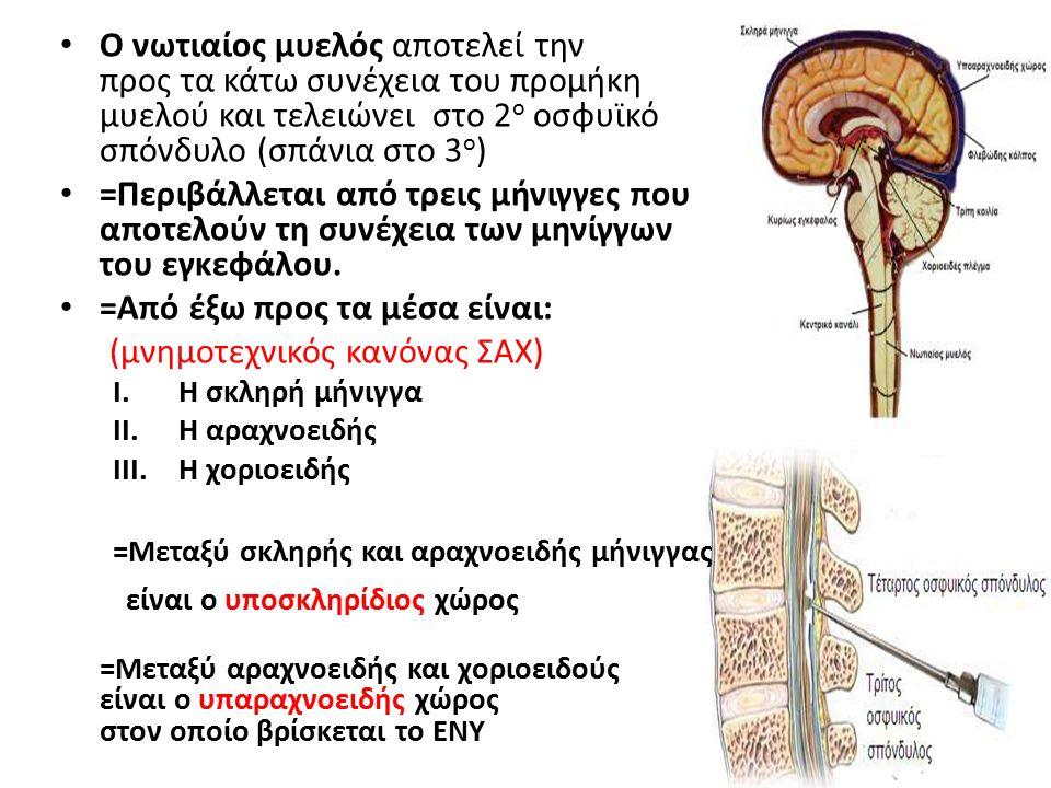 Ο νωτιαίος μυελός αποτελεί την προς τα κάτω συνέχεια του προμήκη μυελού και τελειώνει στο 2 ο οσφυϊκό σπόνδυλο (σπάνια στο 3 ο ) =Περιβάλλεται από τρεις μήνιγγες που αποτελούν τη συνέχεια των μηνίγγων του εγκεφάλου.