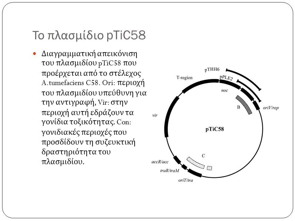 Το πλασμίδιο pTiC58 Διαγραμματική απεικόνιση του πλασμιδίου pTiC58 που προέρχεται από το στέλεχος A.tumefaciens C58.