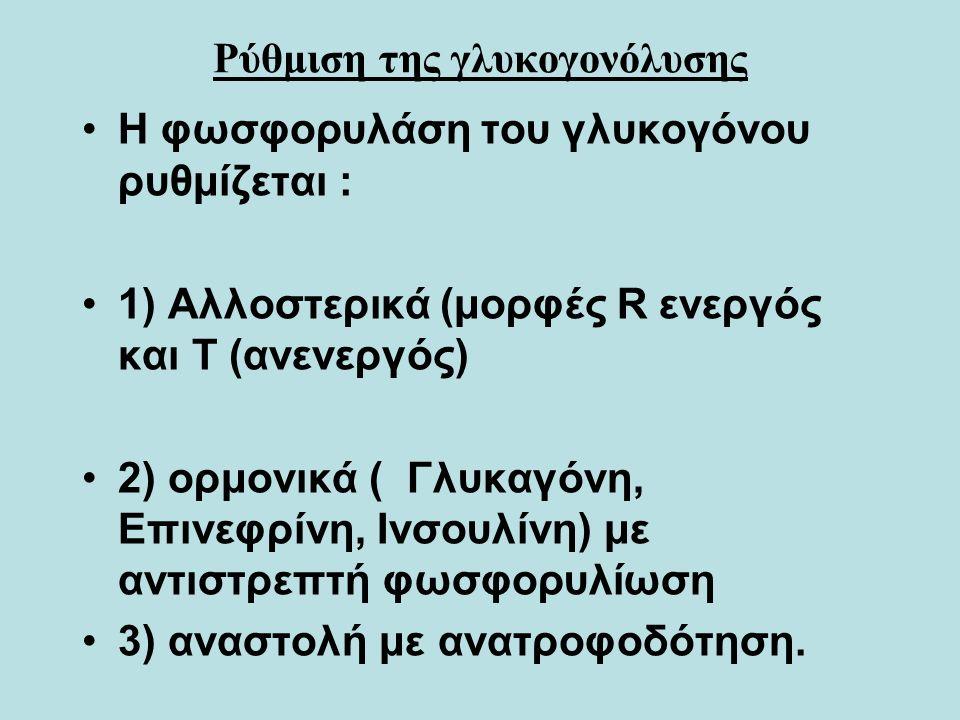 Ρύθμιση της γλυκογονόλυσης Η φωσφορυλάση του γλυκογόνου ρυθμίζεται : 1) Αλλοστερικά (μορφές R ενεργός και T (ανενεργός) 2) ορμονικά ( Γλυκαγόνη, Επινεφρίνη, Ινσουλίνη) με αντιστρεπτή φωσφορυλίωση 3) αναστολή με ανατροφοδότηση.