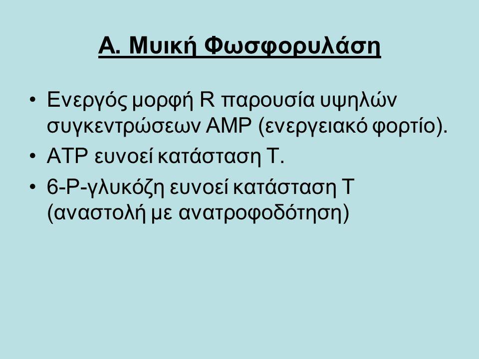 Α. Μυική Φωσφορυλάση Ενεργός μορφή R παρουσία υψηλών συγκεντρώσεων ΑΜΡ (ενεργειακό φορτίο).
