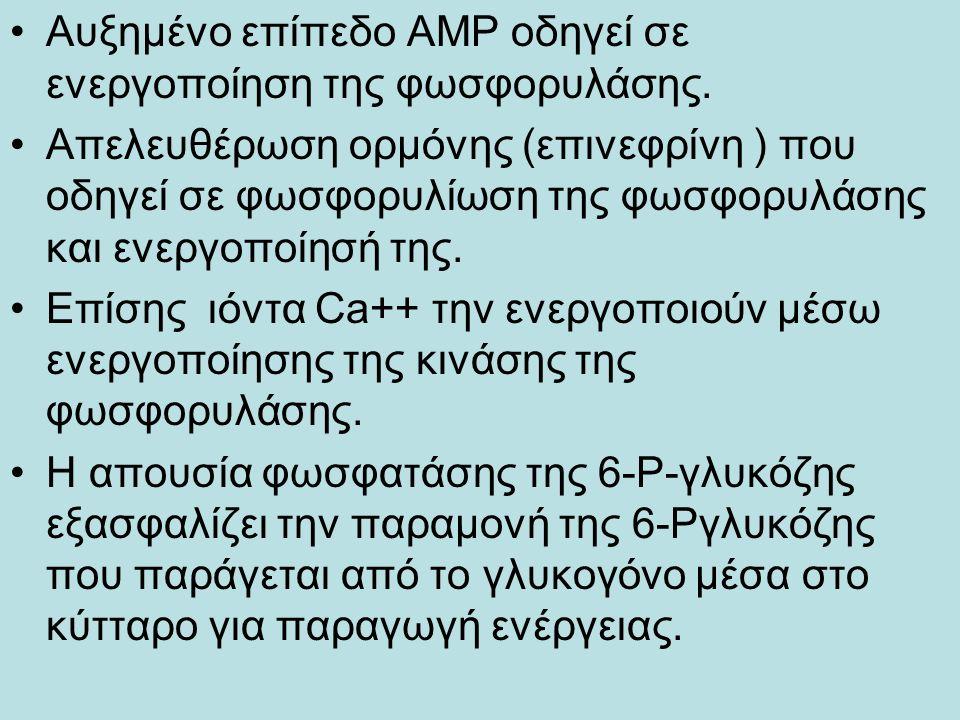 Αυξημένο επίπεδο ΑΜΡ οδηγεί σε ενεργοποίηση της φωσφορυλάσης.