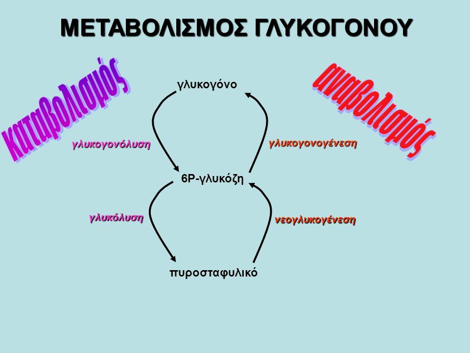 1ο βήμα: ενεργοποιημένης μορφής UDP-γλυκόζης Σύνθεση της ενεργοποιημένης μορφής UDP-γλυκόζης Σύνθεση του Γλυκογόνου