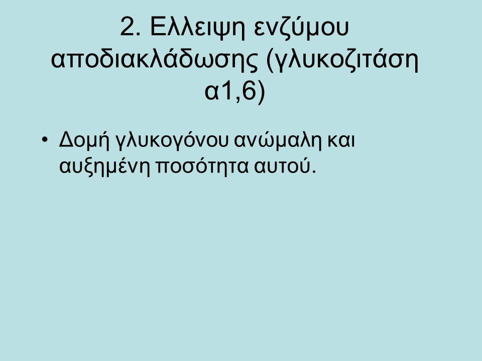 2. Ελλειψη ενζύμου αποδιακλάδωσης (γλυκοζιτάση α1,6) Δομή γλυκογόνου ανώμαλη και αυξημένη ποσότητα αυτού.