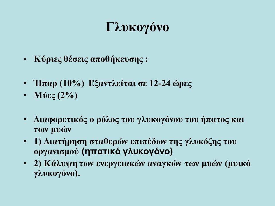 Γλυκογόνο Κύριες θέσεις αποθήκευσης : Ήπαρ (10%) Εξαντλείται σε 12-24 ώρες Μύες (2%) Διαφορετικός ο ρόλος του γλυκογόνου του ήπατος και των μυών 1) Διατήρηση σταθερών επιπέδων της γλυκόζης του οργανισμού (ηπατικό γλυκογόνο) 2) Κάλυψη των ενεργειακών αναγκών των μυών (μυικό γλυκογόνο).