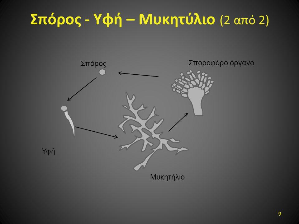 Σπόρος - Υφή – Μυκητύλιο (2 από 2) Σπόρος Υφή Μυκητήλιο Σποροφόρο όργανο 9