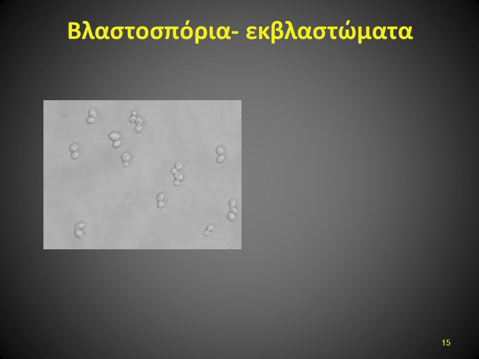 Βλαστοσπόρια- εκβλαστώματα 15