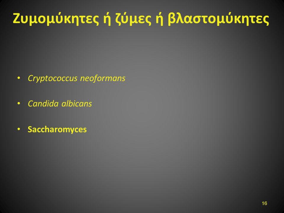 Ζυμομύκητες ή ζύμες ή βλαστoμύκητες Cryptococcus neoformans Candida albicans Saccharomyces 16
