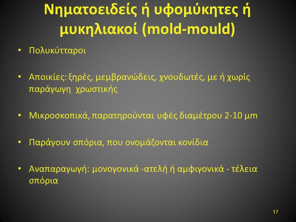 Νηματοειδείς ή υφομύκητες ή μυκηλιακοί (mold-mould) Πολυκύτταροι Αποικίες: ξηρές, μεμβρανώδεις, χνουδωτές, με ή χωρίς παράγωγη χρωστικής Μικροσκοπικά,