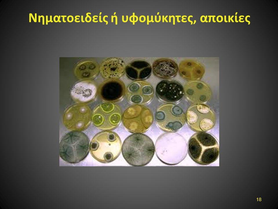 Νηματοειδείς ή υφομύκητες, αποικίες 18