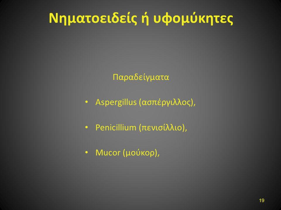 Νηματοειδείς ή υφομύκητες Παραδείγματα Aspergillus (ασπέργιλλος), Penicillium (πενισίλλιο), Mucor (μούκορ), 19