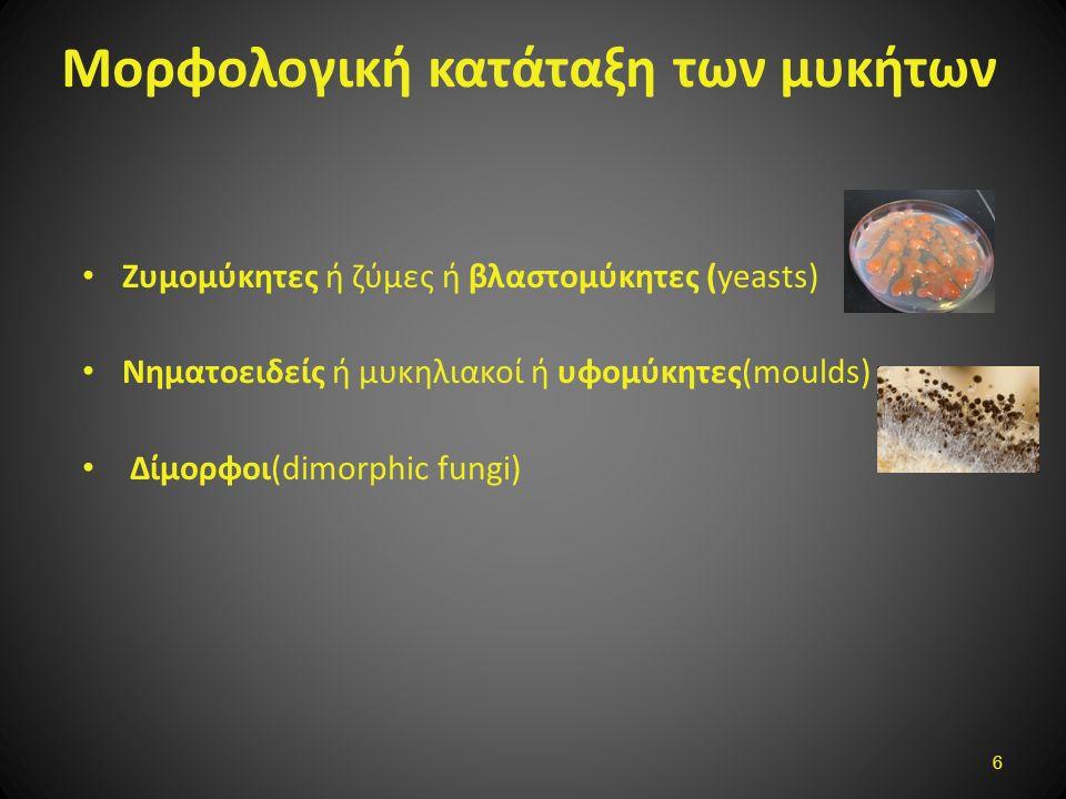 Μορφολογική κατάταξη των μυκήτων Ζυμομύκητες ή ζύμες ή βλαστoμύκητες (yeasts) Νηματοειδείς ή μυκηλιακοί ή υφομύκητες(moulds) Δίμορφοι(dimorphic fungi)