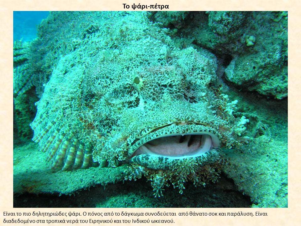 Το ψάρι-πέτρα Είναι το πιο δηλητηριώδες ψάρι. Ο πόνος από το δάγκωμα συνοδεύεται από θάνατο σοκ και παράλυση. Είναι διαδεδομένο στα τροπικά νερά του Ε