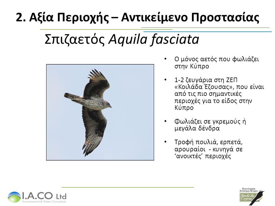 Σπιζαετός Aquila fasciata Ο μόνος αετός που φωλιάζει στην Κύπρο 1-2 ζευγάρια στη ΖΕΠ «Κοιλάδα Έζουσας», που είναι από τις πιο σημαντικές περιοχές για το είδος στην Κύπρο Φωλιάζει σε γκρεμούς ή μεγάλα δένδρα Τροφή πουλιά, ερπετά, αρουραίοι - κυνηγά σε 'ανοικτές' περιοχές 2.