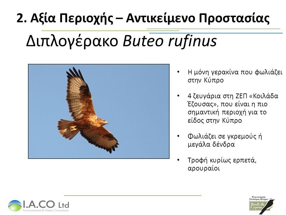 Διπλογέρακο Buteo rufinus Η μόνη γερακίνα που φωλιάζει στην Κύπρο 4 ζευγάρια στη ΖΕΠ «Κοιλάδα Έζουσας», που είναι η πιο σημαντική περιοχή για το είδος στην Κύπρο Φωλιάζει σε γκρεμούς ή μεγάλα δένδρα Τροφή κυρίως ερπετά, αρουραίοι 2.