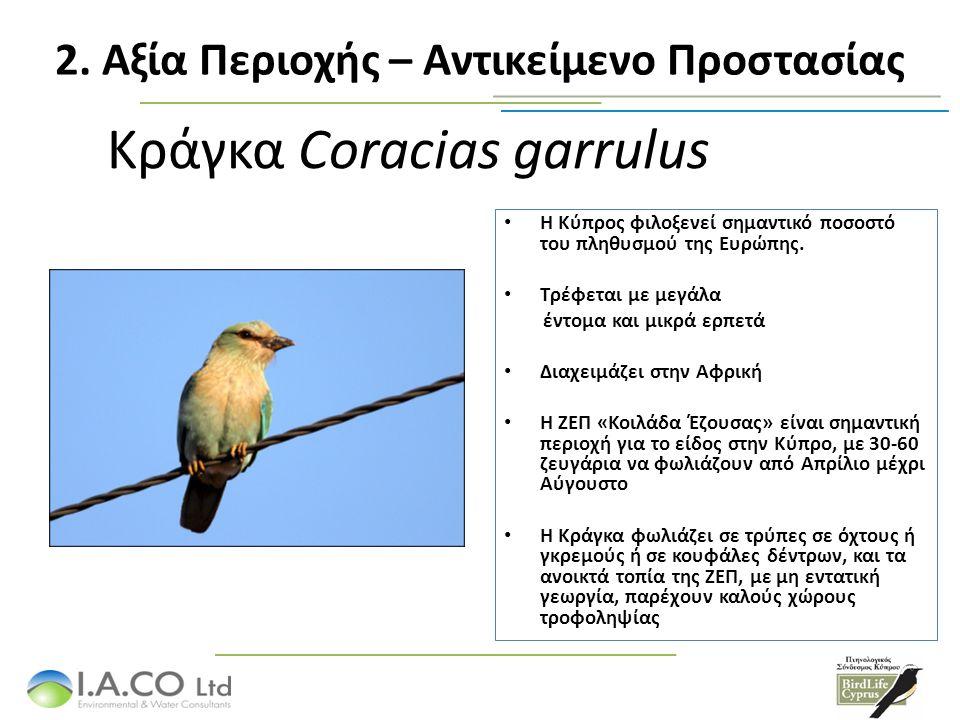 Τρυπομάζης Sylvia melanothorax Είδος του Παραρτήματος Ι της Οδηγίας 2009/147/ΕΚ – φωλιάζει ΜΟΝΟ στη Κύπρο.