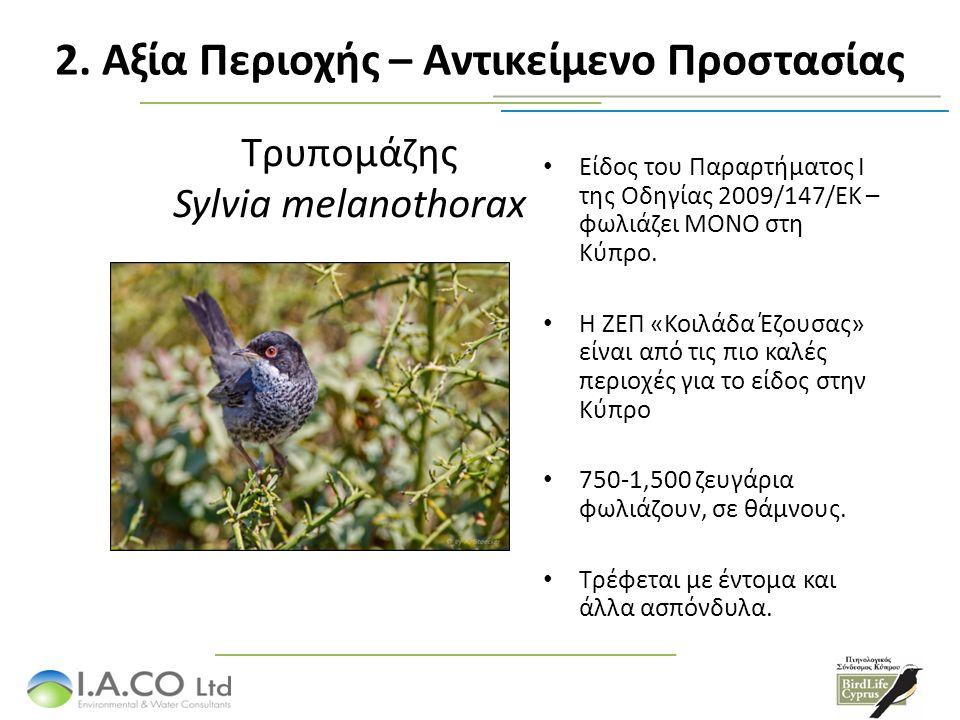Σκαλιφούρτα Oenanthe cypriaca Είδος του Παραρτήματος Ι της Οδηγίας 2009/147/ΕΚ – φωλιάζει ΜΟΝΟ στη Κύπρο.