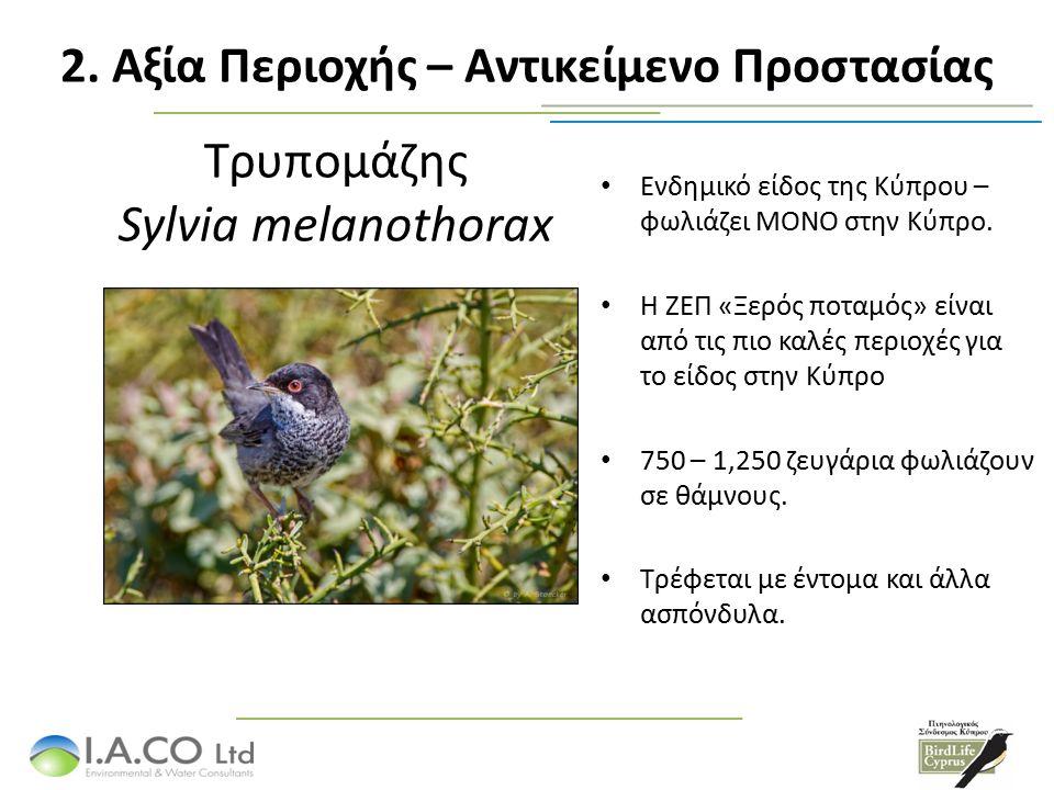 Τρυπομάζης Sylvia melanothorax Ενδημικό είδος της Κύπρου – φωλιάζει ΜΟΝΟ στην Κύπρο.