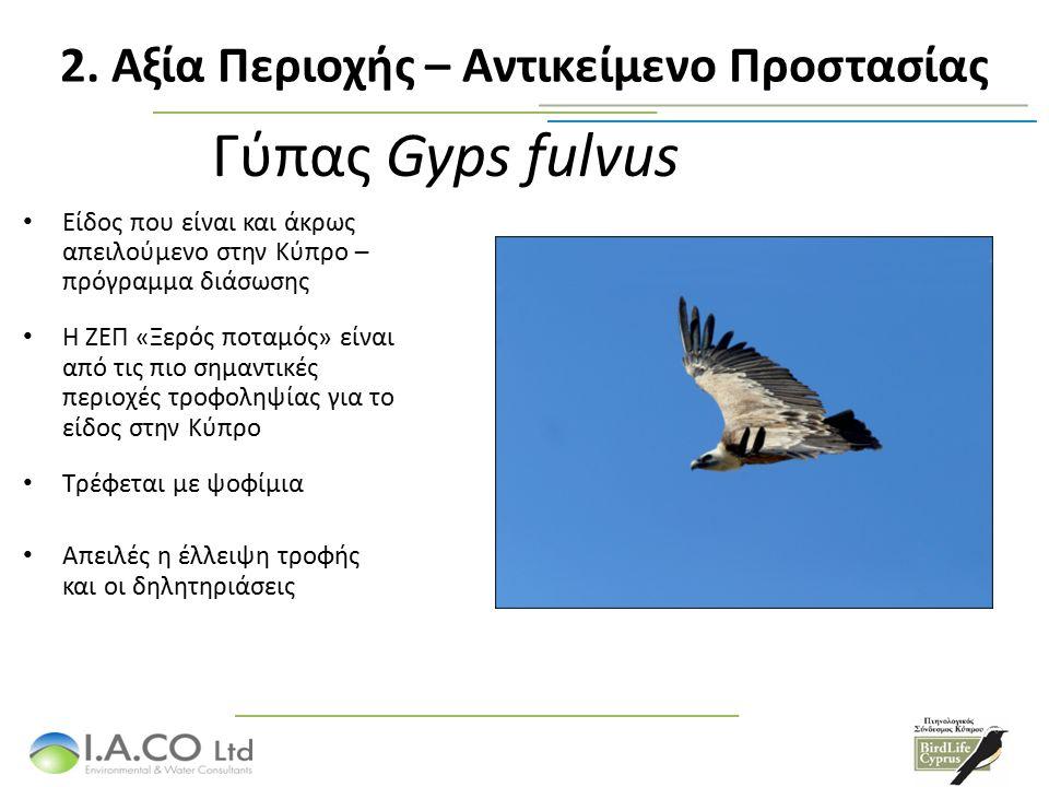 Γύπας Gyps fulvus Είδος που είναι και άκρως απειλούμενο στην Κύπρο – πρόγραμμα διάσωσης Η ΖΕΠ «Ξερός ποταμός» είναι από τις πιο σημαντικές περιοχές τροφοληψίας για το είδος στην Κύπρο Τρέφεται με ψοφίμια Απειλές η έλλειψη τροφής και οι δηλητηριάσεις 2.
