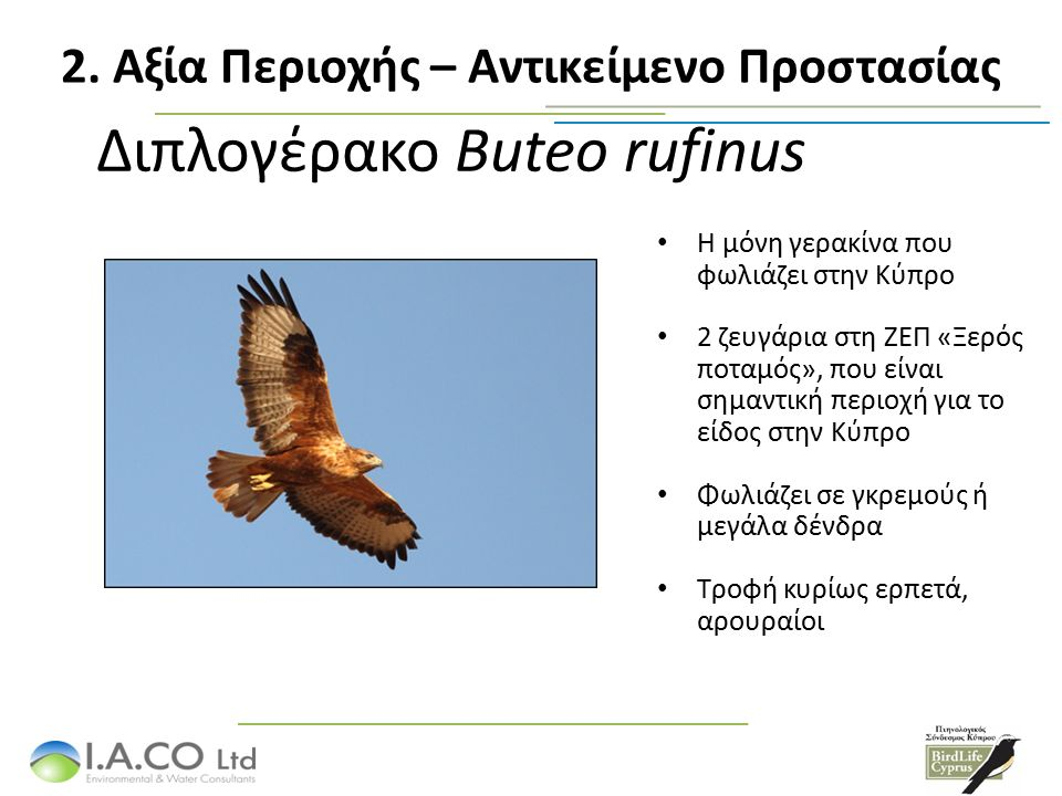 Διπλογέρακο Buteo rufinus Η μόνη γερακίνα που φωλιάζει στην Κύπρο 2 ζευγάρια στη ΖΕΠ «Ξερός ποταμός», που είναι σημαντική περιοχή για το είδος στην Κύπρο Φωλιάζει σε γκρεμούς ή μεγάλα δένδρα Τροφή κυρίως ερπετά, αρουραίοι 2.