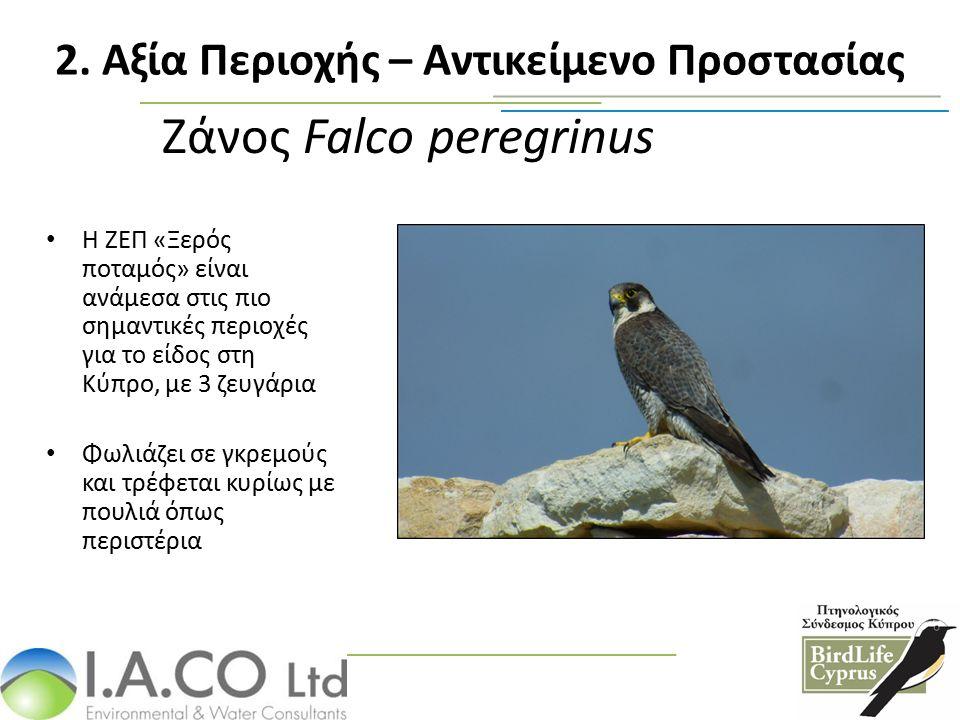 Ζάνος Falco peregrinus Η ΖΕΠ «Ξερός ποταμός» είναι ανάμεσα στις πιο σημαντικές περιοχές για το είδος στη Κύπρο, με 3 ζευγάρια Φωλιάζει σε γκρεμούς και τρέφεται κυρίως με πουλιά όπως περιστέρια 2.