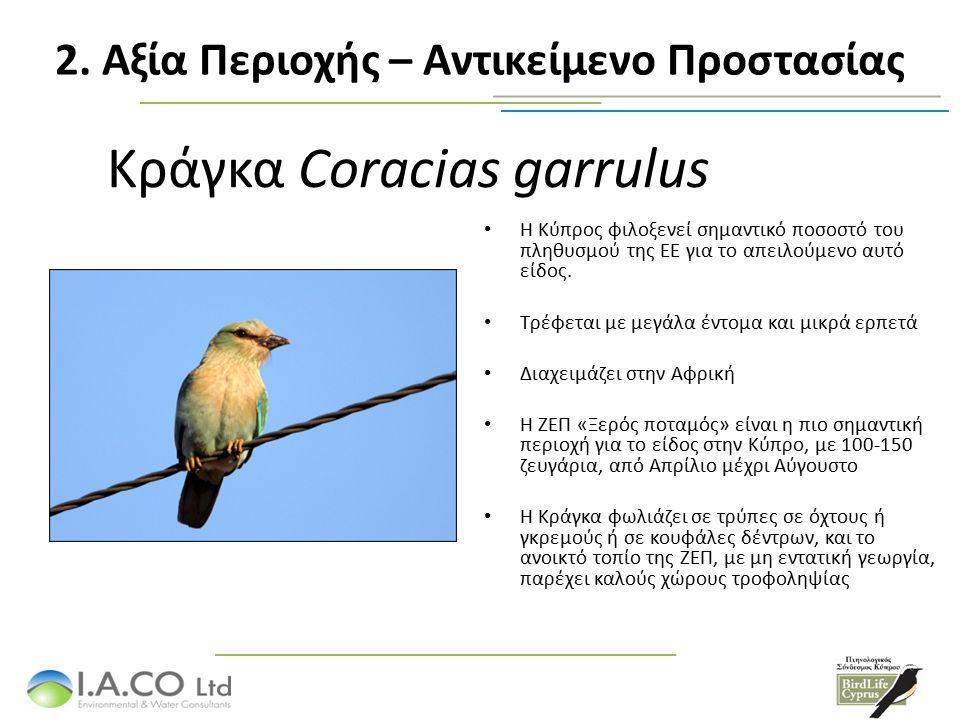 Κράγκα Coracias garrulus Η Κύπρος φιλοξενεί σημαντικό ποσοστό του πληθυσμού της ΕΕ για το απειλούμενο αυτό είδος.
