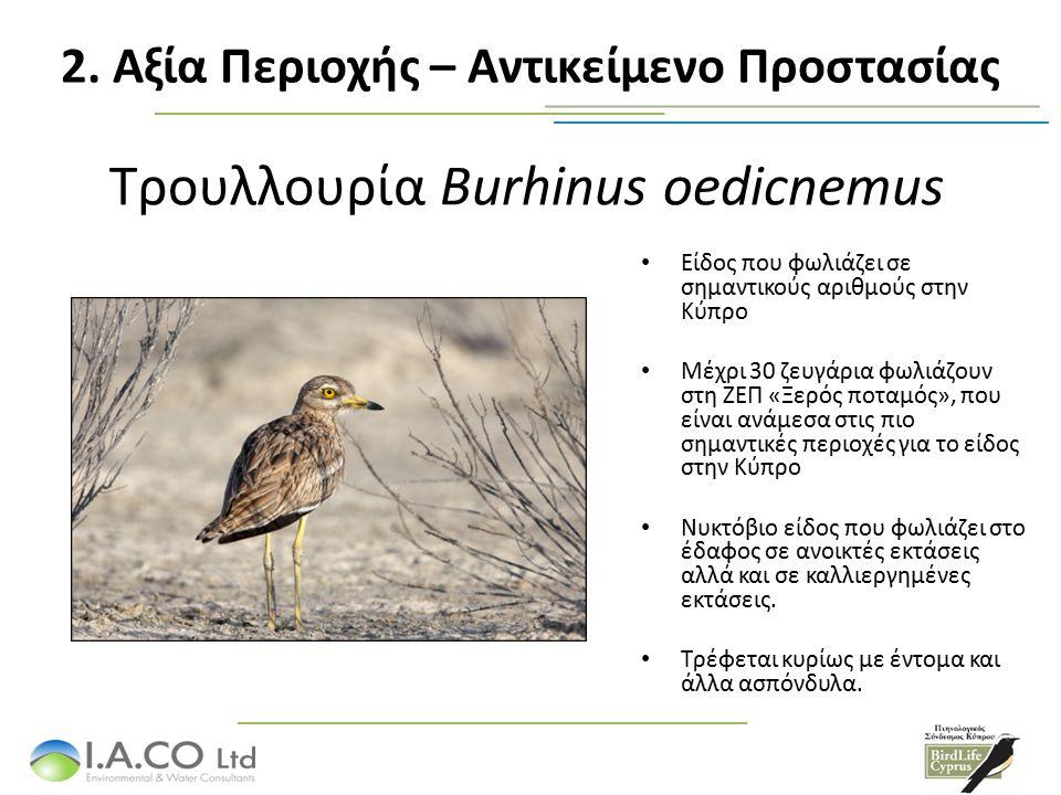 Τρουλλουρία Burhinus oedicnemus Είδος που φωλιάζει σε σημαντικούς αριθμούς στην Κύπρο Μέχρι 30 ζευγάρια φωλιάζουν στη ΖΕΠ «Ξερός ποταμός», που είναι ανάμεσα στις πιο σημαντικές περιοχές για το είδος στην Κύπρο Νυκτόβιο είδος που φωλιάζει στο έδαφος σε ανοικτές εκτάσεις αλλά και σε καλλιεργημένες εκτάσεις.