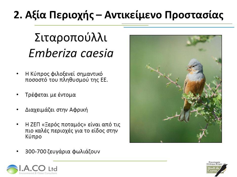 Σιταροπούλλι Emberiza caesia Η Κύπρος φιλοξενεί σημαντικό ποσοστό του πληθυσμού της ΕΕ.