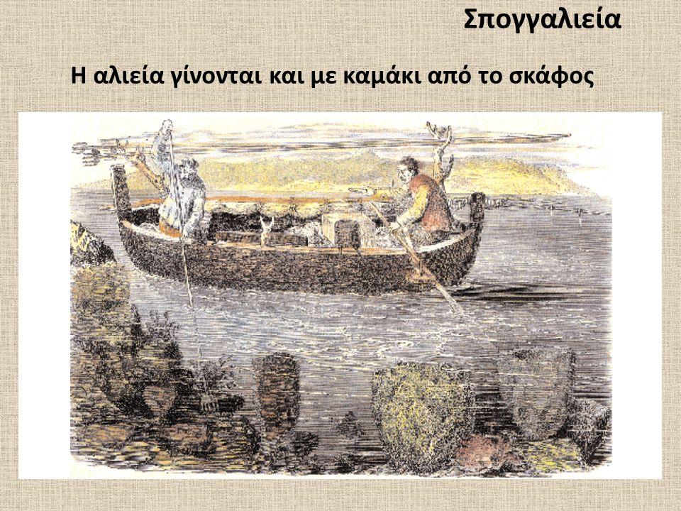 Σπογγαλιεία Η αλιεία γίνονται και με καμάκι από το σκάφος