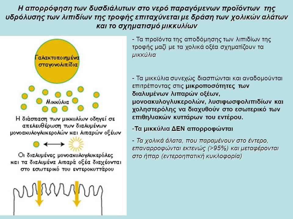 απορρόφηση χολικών αλάτων μικκυλίων Η απορρόφηση των δυσδιάλυτων στο νερό παραγόμενων προϊόντων της υδρόλυσης των λιπιδίων της τροφής επιταχύνεται με δράση των χολικών αλάτων και το σχηματισμό μικκυλίων μικκύλια - Τα προϊόντα της αποδόμησης των λιπιδίων της τροφής μαζί με τα χολικά οξέα σχηματίζουν τα μικκύλια - Τα μικκύλια συνεχώς διασπώνται και αναδομούνται επιτρέποντας στις μικροποσότητες των διαλυμένων λιπαρών οξέων, μονοακυλογλυκερολών, λυσιφωσφoλιπιδίων και χοληστερόλης να διαχυθούν στο εσωτερικό των επιθηλιακών κυττάρων του εντέρου.