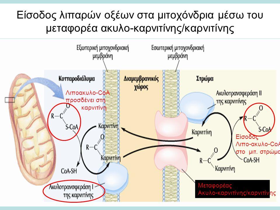 Είσοδος λιπαρών οξέων στα μιτοχόνδρια μέσω του μεταφορέα ακυλο-καρνιτίνης/καρνιτίνης Λιποακυλο-CoA προσδένει στη καρνιτίνη Μεταφορέας Ακυλο-καρνιτίνης/καρνιτίνης Είσοδος Λιπο-ακυλο-CoA στο μιτ.