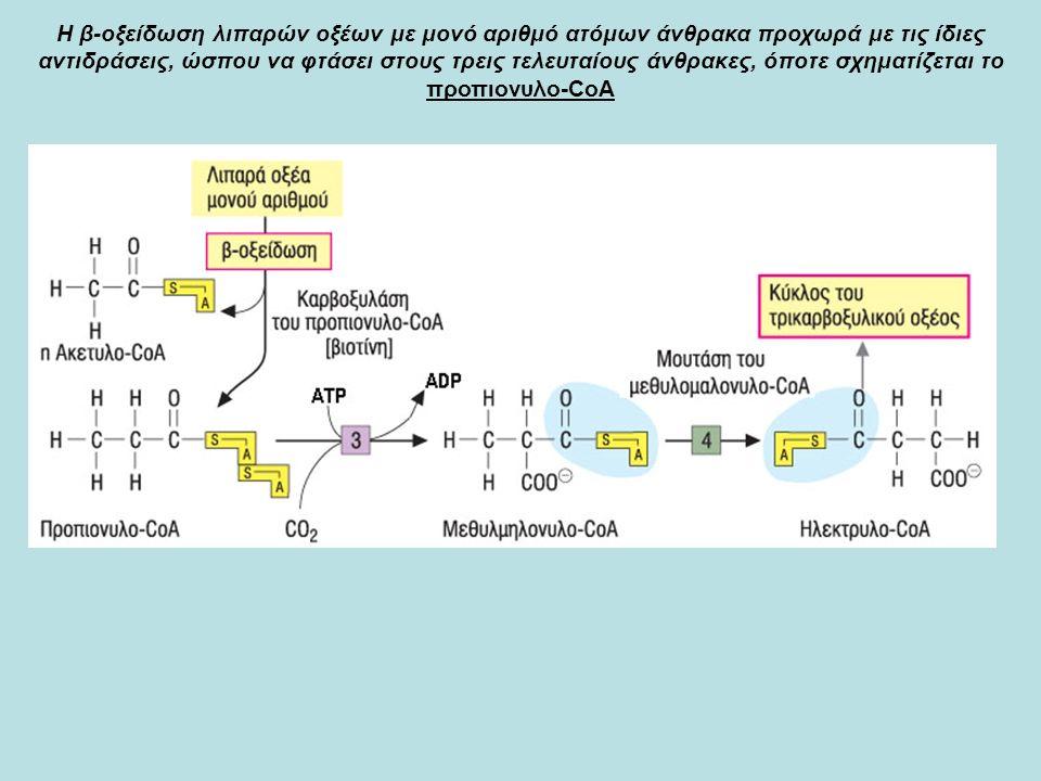 Η β-οξείδωση λιπαρών οξέων με μονό αριθμό ατόμων άνθρακα προχωρά με τις ίδιες αντιδράσεις, ώσπου να φτάσει στους τρεις τελευταίους άνθρακες, όποτε σχηματίζεται το προπιoνυλο-CoA