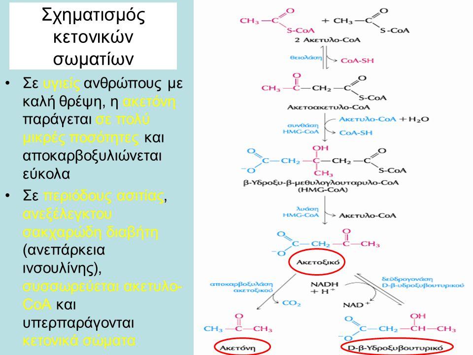 Σχηματισμός κετονικών σωματίων Σε υγιείς ανθρώπους με καλή θρέψη, η ακετόνη παράγεται σε πολύ μικρές ποσότητες και αποκαρβοξυλιώνεται εύκολα Σε περιόδους ασιτίας, ανεξέλεγκτου σακχαρώδη διαβήτη (ανεπάρκεια ινσουλίνης), συσσωρεύεται ακετυλο- CoA και υπερπαράγονται κετονικά σώματα